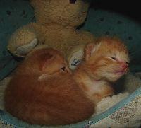 Dumpster Kittens